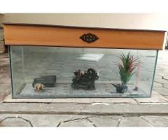 4.5ft used Fisk tank for sale along with Top and accessories